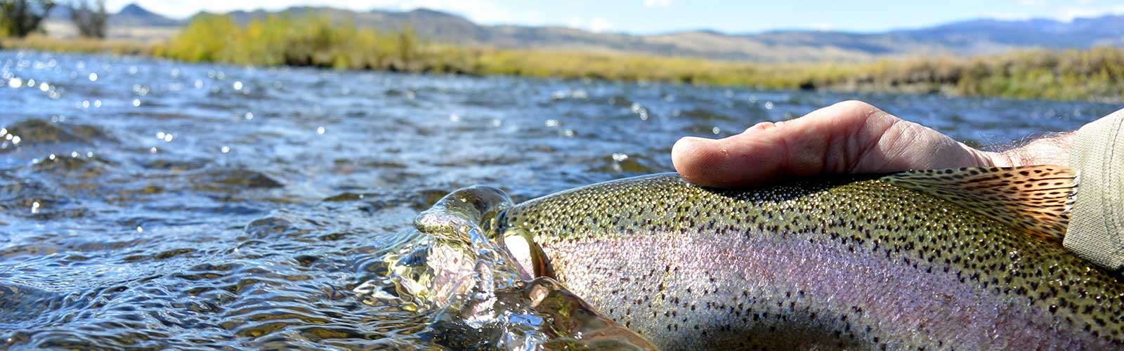 Fly fishing tips nymphing fishtales outfitting for Beaverhead fishing report