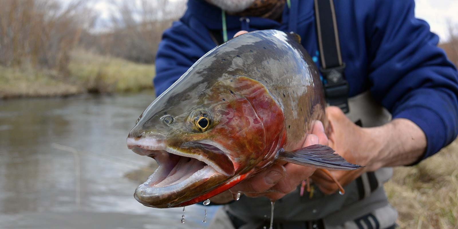 Guided Fly Fishing Trips in Southwest Montana